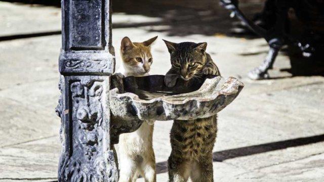 街角で水を立ち飲みする猫